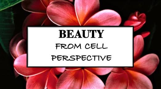 Beauty_naturalproducts